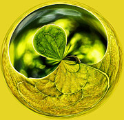 Orb Photos - Leaf Orb by Heather Bridenstine