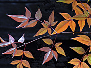 Judy  Johnson - Leaf Patterns
