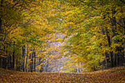 Leaf Tunnel Prints - Leaf Tunnel Print by Bruce Neumann