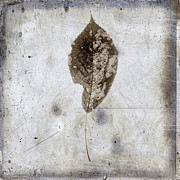 Single Object Art - Leaf  vintage look by Bernard Jaubert