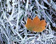 Hans Reinhard - Leaf With Frost
