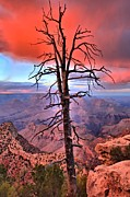 Tree At Sunset Prints - Leafless Sunset Print by Adam Jewell