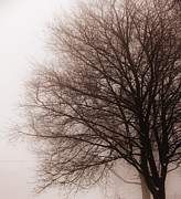 Monochrome Posters - Leafless tree in fog Poster by Elena Elisseeva