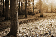Autumn Prints Prints - Leafy Autumn Woodland in Sepia Print by Natalie Kinnear