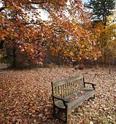 William  Doyle - Leafy Bench