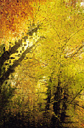 Autumn Photographs Digital Art Prints - Leafy Canopy I Print by Natalie Kinnear