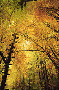 Abstract Canvas Photos Prints - Leafy Canopy II Print by Natalie Kinnear