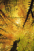 Autumn Photographs Digital Art - Leafy Canopy III by Natalie Kinnear