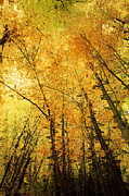 Autumn Photographs Digital Art Prints - Leafy Canopy IV Print by Natalie Kinnear