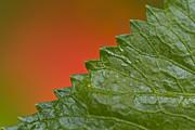 Leafy Print by Heiko Koehrer-Wagner