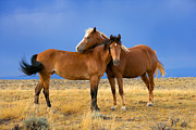 Wild Horses Photo Prints - Lean on Me Wild Mustang Print by Rich Franco