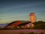 Wooden Building Prints - Leaning Silo  Print by Bill Gallagher