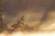 Leaning Tree In Swirling Fog Print by Larry Ricker