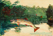 Leaping Trout By Winslow Homer Print by Pg Reproductions