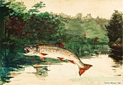 Reproduction - Leaping Trout