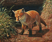 Red Fox Pup - Learning Print by Crista Forest