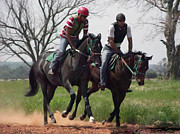 Race Horse Photos - Learning to Run by Kris Wolf