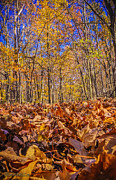 LeeAnn McLaneGoetz McLaneGoetzStudioLLCcom - Leaves above leaves below