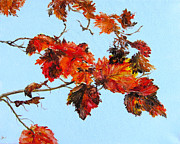 Diane Kraudelt - Leaves Against The Sky 2