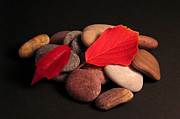 Art Photography Photos - Leaves and Stones by Art Photography