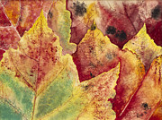 Rina Bhabra - Leaves - Autumn
