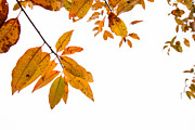 Karol  Livote - Leaves Changing