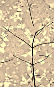 Leaf Abstract Prints - Leaves Fade to Beige Melody Print by Jennie Marie Schell