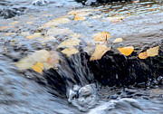 Photogrpah Posters - Leaves flowing through rapids Poster by Tony Webb