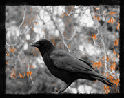 Crow Art Prints - Leaves Print by Gothicolors And Crows