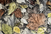 Sharpsburg Photos - Leaves in Abstract by Mick Burkey