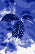 Red Leaves Photo Originals - Leaves  in blue color by Tommy Hammarsten