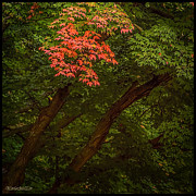 LeeAnn McLaneGoetz McLaneGoetzStudioLLCcom - Leaves in Fall