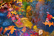 Asheville Digital Art - Leaves In Ice by John Haldane