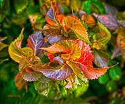 Michelle Wiarda - Leaves in Motion