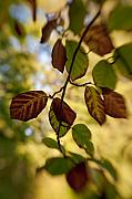 Poetic Photo Posters - Leaves in the Breeze Poster by Wenata Babkowski