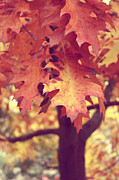 Trees - Leaves of Fall by Cathie Tyler