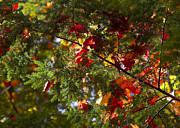 Steven Ralser - Leaves on evergreen