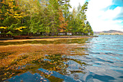 Evergreen Trees Posters - Leaves on Fourth Lake Poster by David Patterson