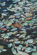Birdseye Painting Posters - Leaves on Pond Poster by Nick Payne