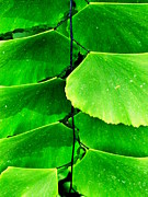Leaves Print by Terry Johnson