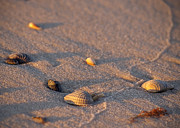 Seashells Photos - Left Behind by Liz Masoner