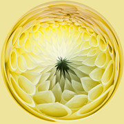 Pretty Dahlia Posters - Lemon Lady Poster by Anne Gilbert