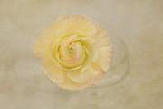 Kim Hojnacki - Lemon Pastels