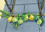 Amalfi Paintings - Lemon Swag by Marsha Elliott