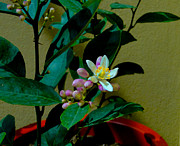Lemon Tree Flower Print by Al Bourassa