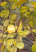 Sandy Linden - Lemon Tree