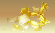 Kelly Photo Prints - Lemon zest Print by Valerie Anne Kelly