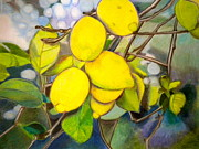 Yellow Leaves Drawings Prints - Lemons Print by Debi Pople