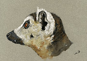 Nature Study Painting Posters - Lemur head study Poster by Juan  Bosco