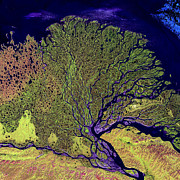 Map Art Photo Prints - Lena River Delta Print by Adam Romanowicz